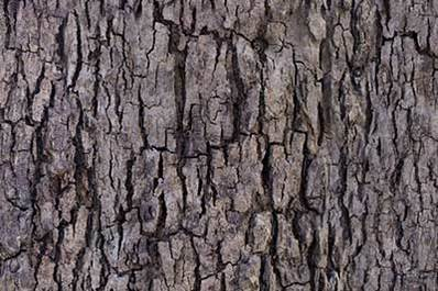 Tree Bark Texture: Background Images & Pictures