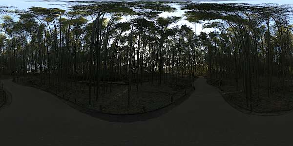 Panorama HDR HDRi lightprobe panoramic high dynamic range spherical 360 outdoor forest trees Japan bamboo road path Kyoto