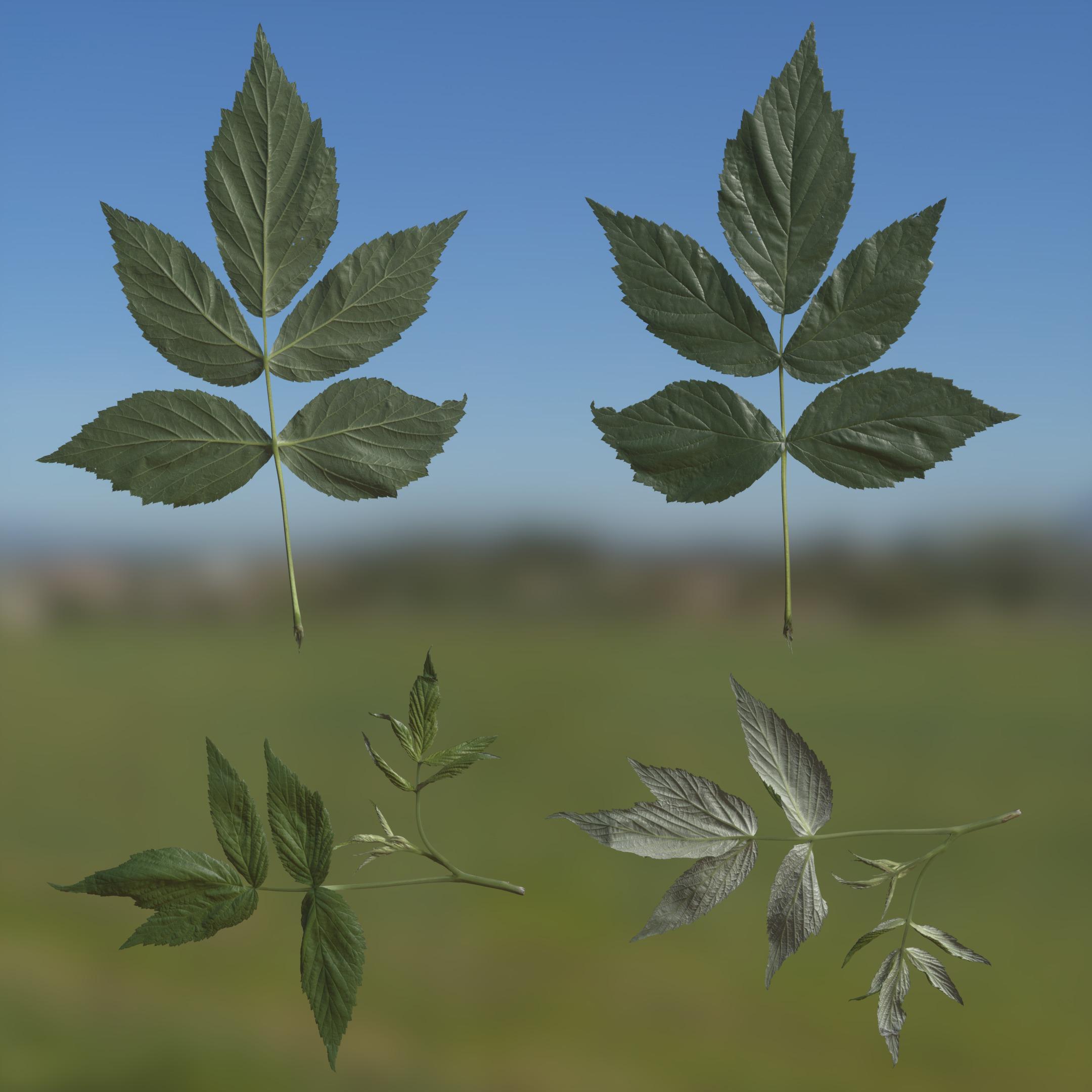 3d Scanned Lilac Black Leaves Dry Atlas