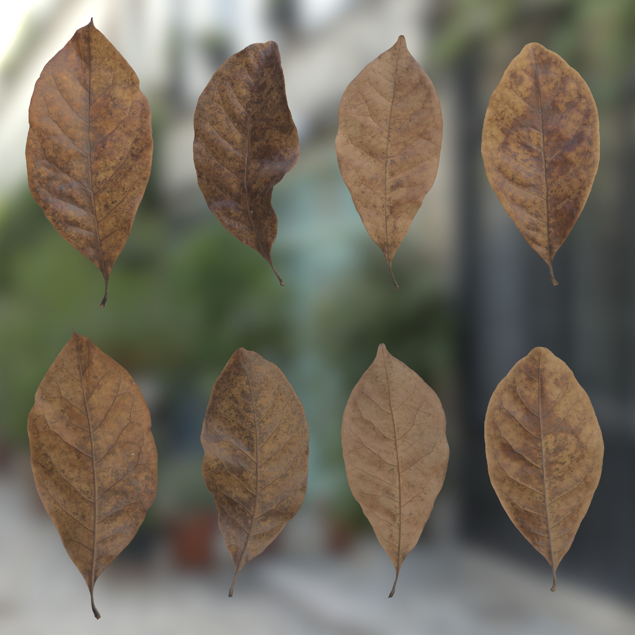 3d Scanned Dead Magnolia Tree Leaves Atlas 01c
