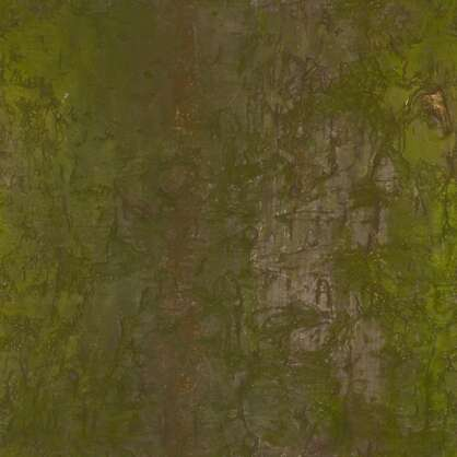 1.8x1.8m srgb scan scanned photogrammetry tree bark treebark japan