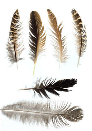 feathers feather