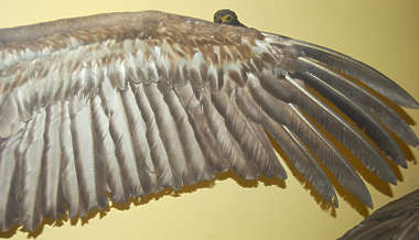 wing bird feathers feather