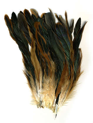 feather chicken brush feathers