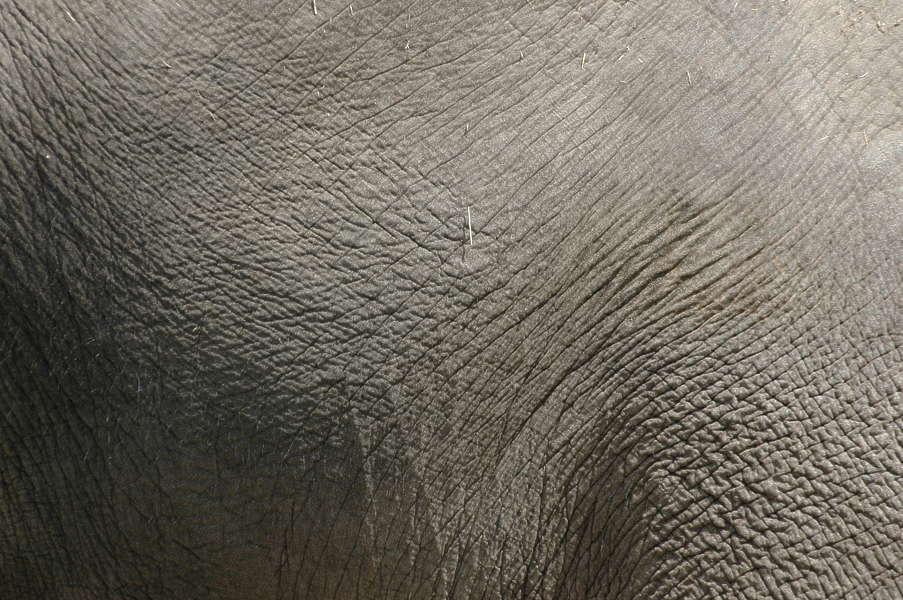 Elephant0007 - Free Background Texture - animal elephant ...