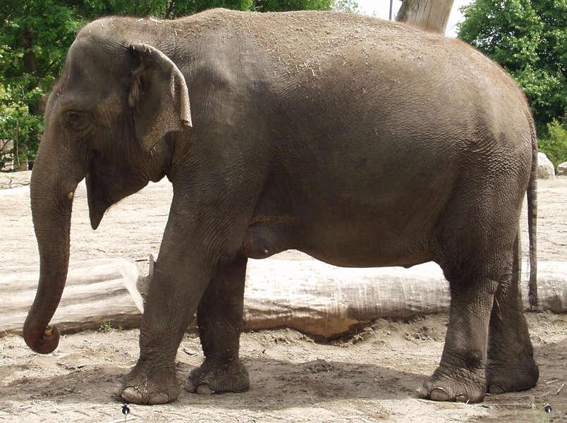 Elephant0038 Free Background Texture Animal Elephant