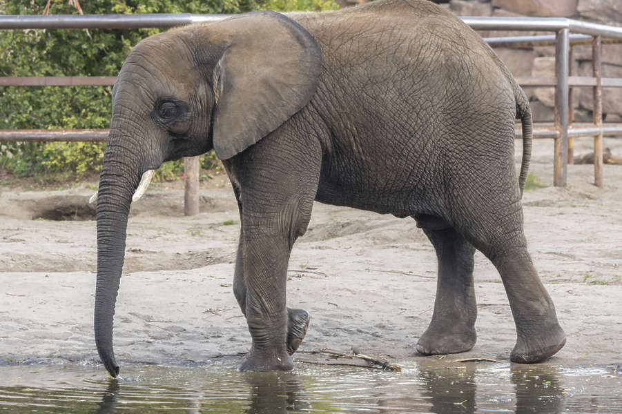 elephant0161 - free background texture