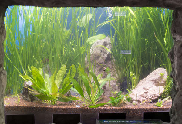 aquarium fish tank waterplants japan