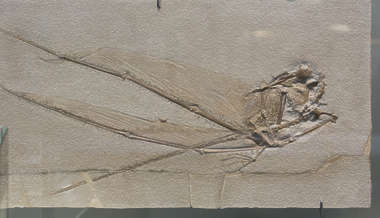 fossil fossils insect prehistoric