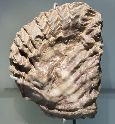 fossil fossils prehistoric