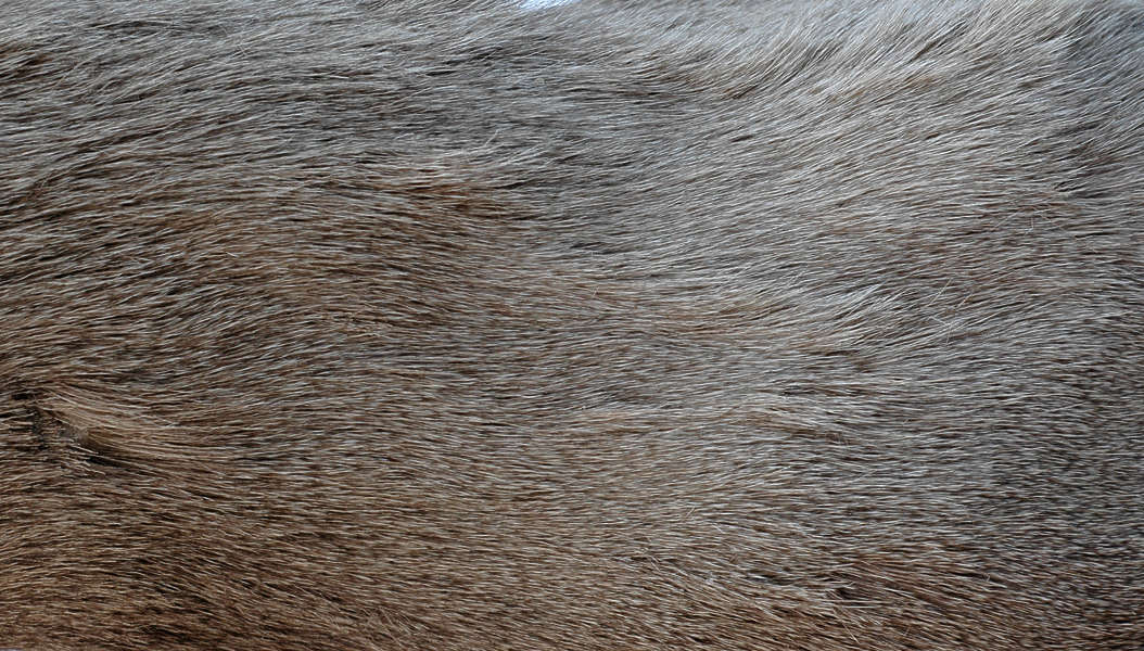Fur0007 Free Background Texture Animal Fur Hair Hairy
