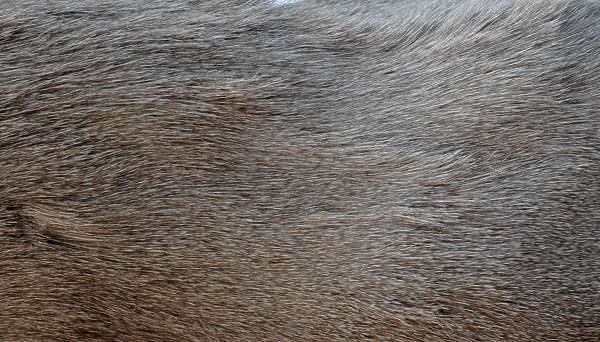 animal fur hair hairy hairs