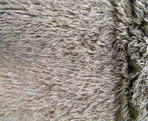 fur sheep animal hair hairy