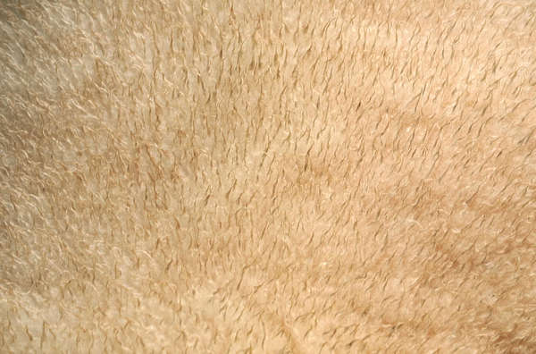 animal sheep fur hair hairs