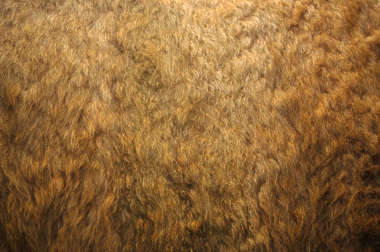fur hair hairs coat