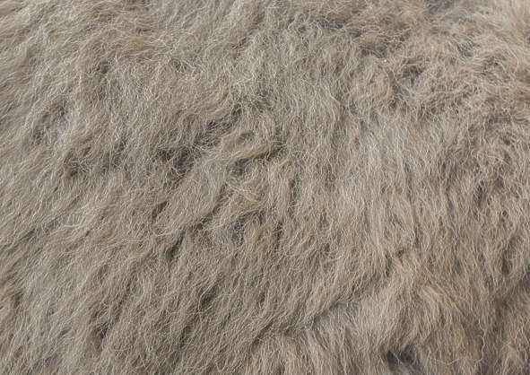 animal fur matted