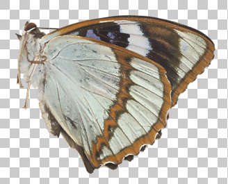 butterfly insect wing wings insects butterflies masked transparency