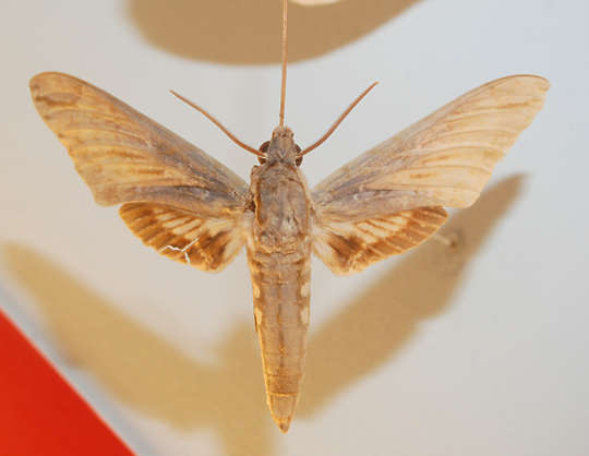 insect bug moth