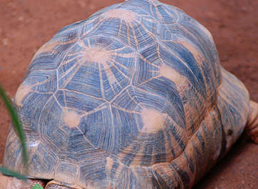 reptile turtle shell skin scales