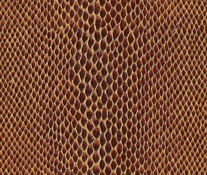 reptiles0030 free background texture snakeskin