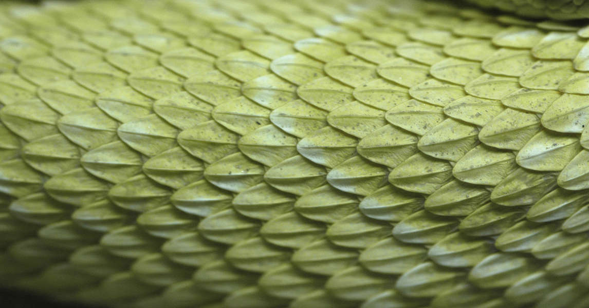 Reptiles0012 Free Background Texture Snake Reptile