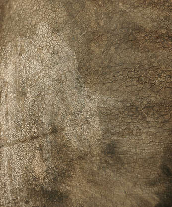 animal rhino rhinoceros closeup skin