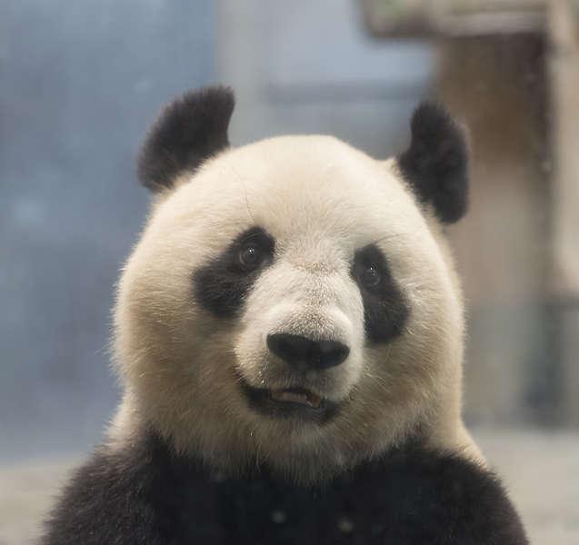 Panda Marble Texture