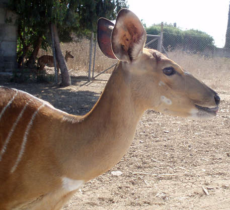 animal deer hooved