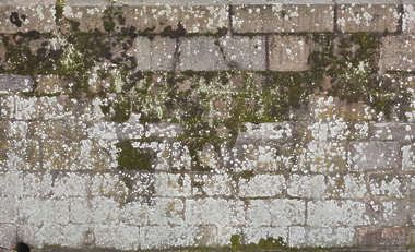 brick medieval old dirty moss