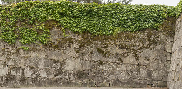 castle wall old medieval japanese moss mossy brick stones japan
