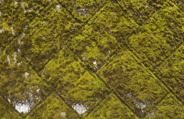moss mossy wall castle japan japanese brick medieval blocks overgrown