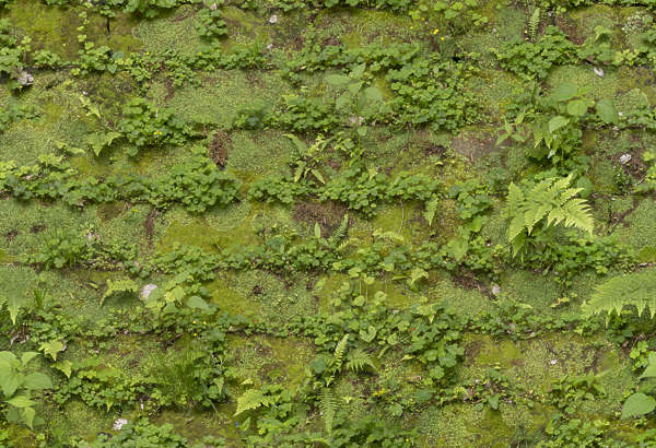 moss mossy wall japan brick old medieval worn castle wall blocks overgrown