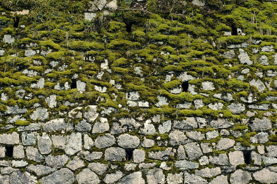 Brickoldovergrown0016