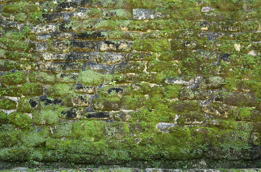 Brickoldovergrown0042 Free Background Texture Brick