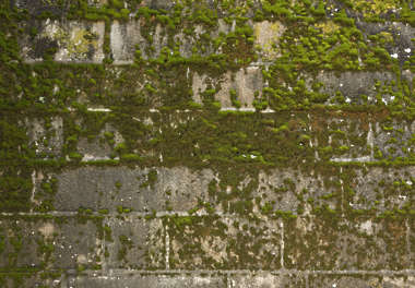 moss mossy brick medieval old