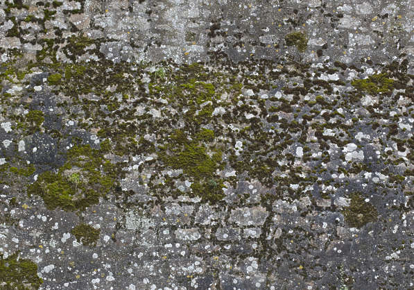 moss mossy brick medieval