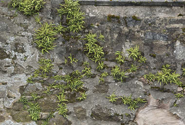 brick medieval mixed mossy UK