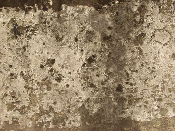 concrete dirty rough old moss plaster grunge grungemap