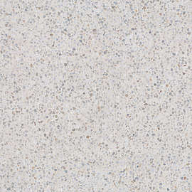 floor texture. 114 of photosets Concrete Floor Texture  Background Images Pictures
