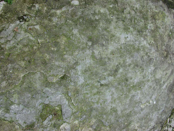 concrete rough floor moss green