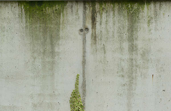 concrete leaking mossy