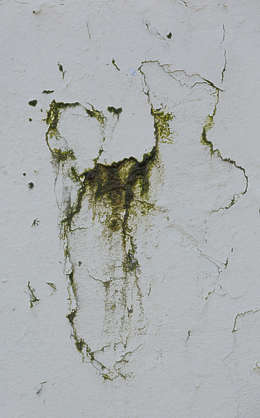 UK mossy decal dirty stained stain
