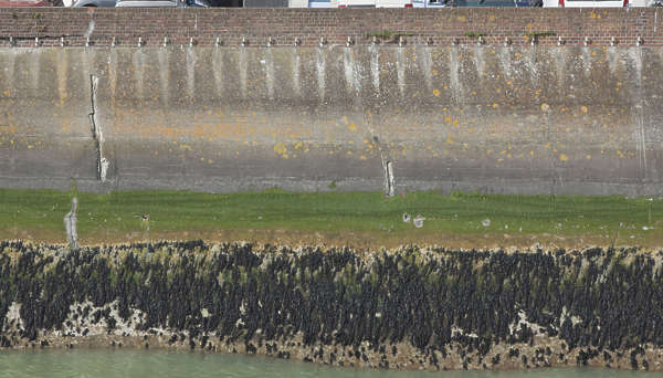 concrete harbour dock water dirty seaweed wall