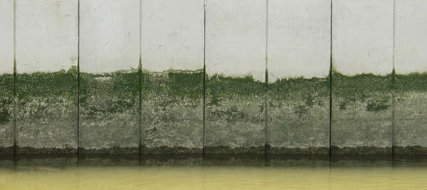 concrete dirty green moss gradient water