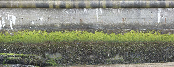 concrete mossy coast harbor UK