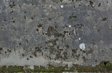 concrete old mossy UK