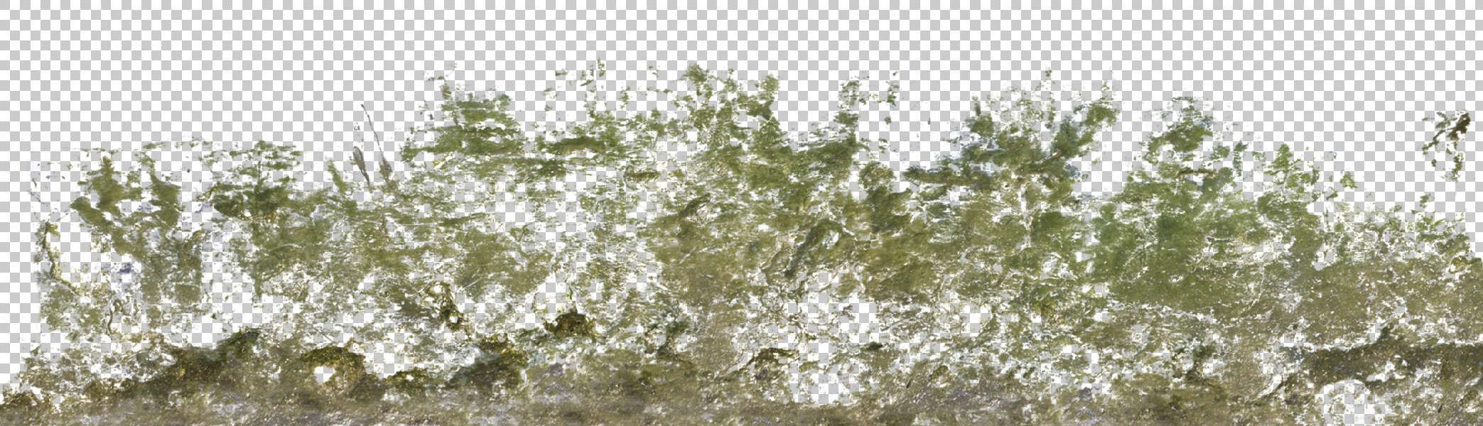 Decalbottom0023 Free Background Texture Stain Mossy