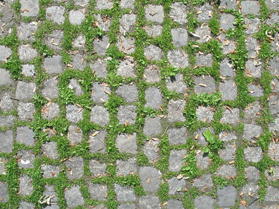 tiles brick floor street floor regular moss grass