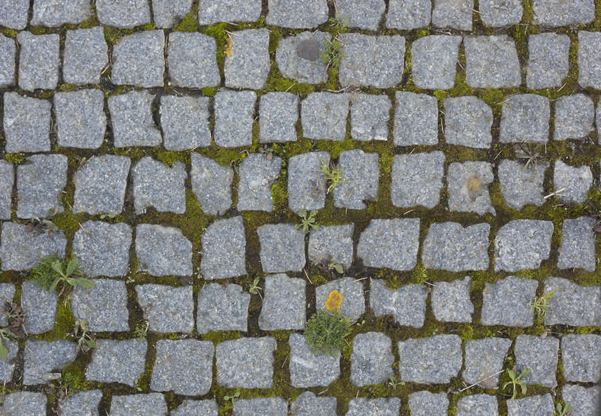 Floorstreets Free Background Texture Cobblestone Floor Cobble Stone Regular Mossy