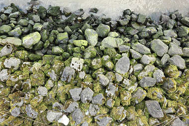 stones waterside water river riverside floor ground cobble